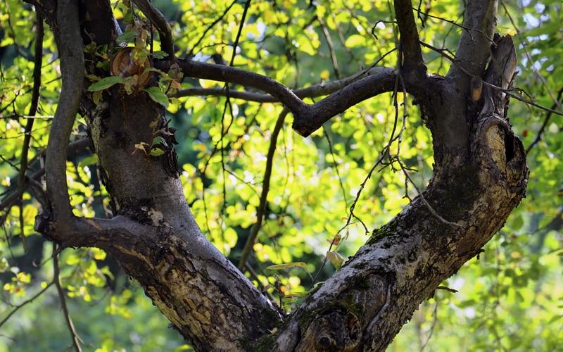 Sevgi ve Doğa Üzerine Düşünceler